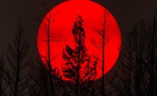 [légende :] Le soleil est obscurci par la fumée des feux de forêt brûlant au loin derrière des arbres calcinés près de Williams Lake, C.-B., le dimanche 30 juillet 2017. (LA PRESSE CANADIENNE /Darryl Dyck)