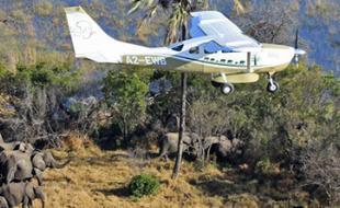 Un des avions utilisés dans le cadre du recensement des éléphants en Afrique. (Photo avec la permission du site Web « Great Elephant Census ».)