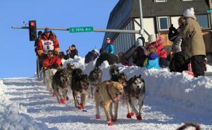 Le 1er mars, le champion de l'Iditarod Mitch Seavey mène son attelage à travers Anchorage, Alaska, lors du départ d'honneur de l'édition 2014 de l'Iditarod, la célèbre course de chiens de traîneaux. (AP Photo/Dan Joling)