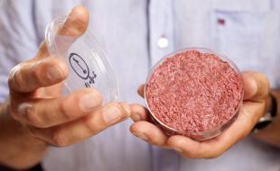 Un hamburger fait de viande cultivée en laboratoire laquelle a été mise au point par le professeur Mark Post de l'Université de Maastricht aux Pays-Bas. [Mention de source : PA Photos Limited]