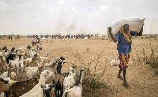 Un Éthiopien porte de la nourriture pour animaux d'élevage, le 8 avril 2016. (AP Photo/Mulugeta Ayene)