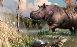Un rhinocéros ancien tel que dessiné par l'artiste Julius Csotonuy via MSN.