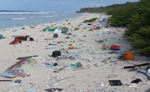 Des débris plastiques sur la plage de l'Est, île Henderson. [Photo de Jennifer Lavers]